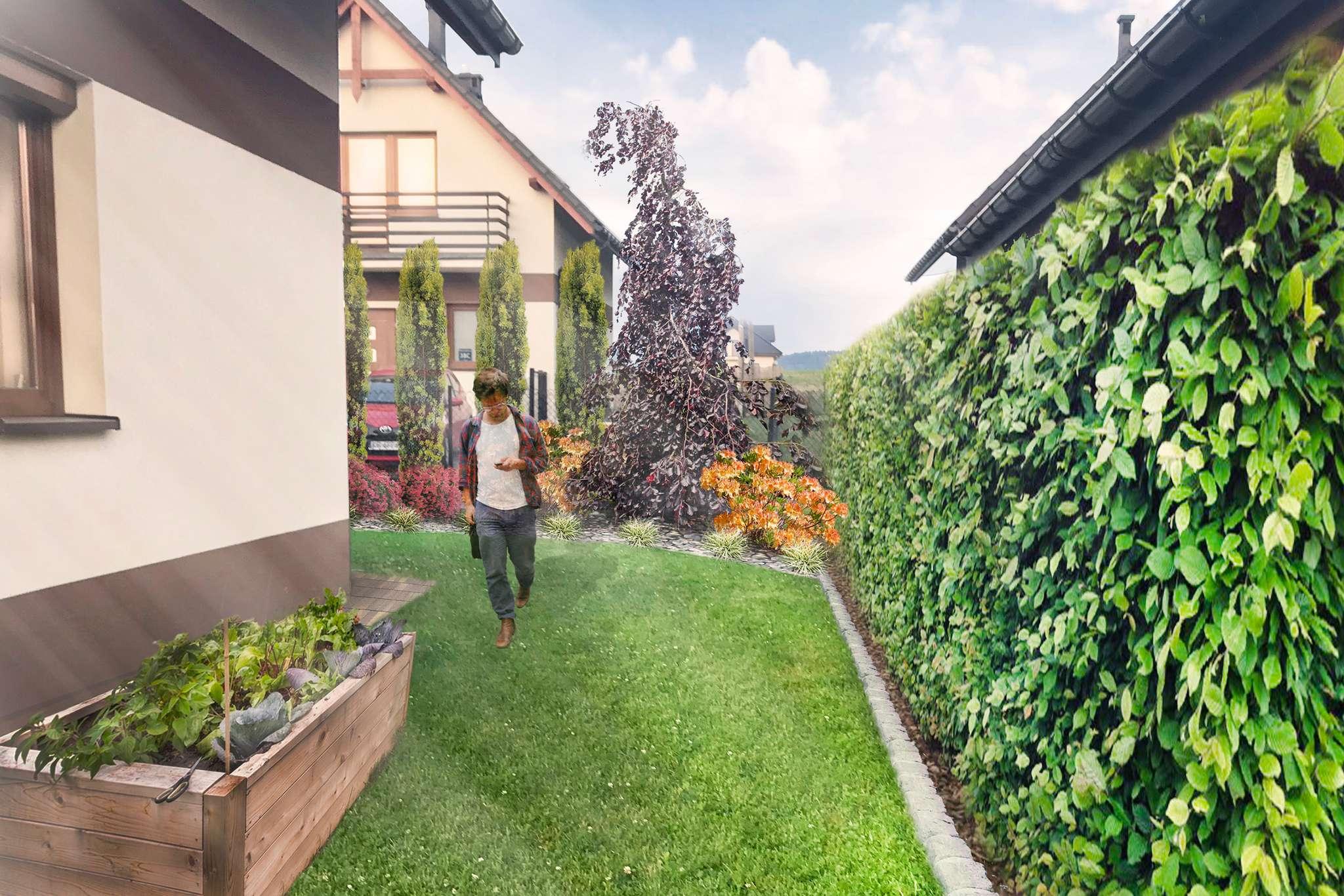 ogród w ognistych barwach - widok na warzywnik i żywopłot z grabu