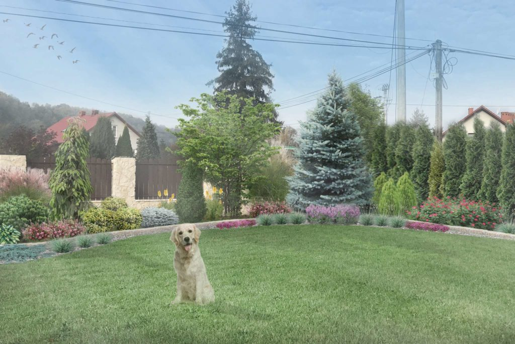 ogród w stylu swobodnym - wizualizacja rabaty ze świerkiem